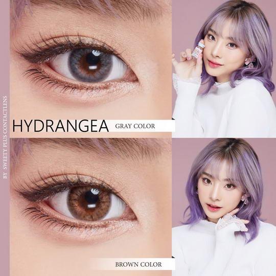 !Hydrangea (mini) Sweety Bigeye Images